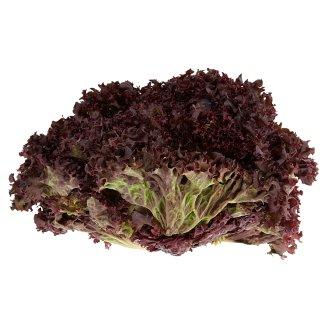 Lollo Bionda saláta