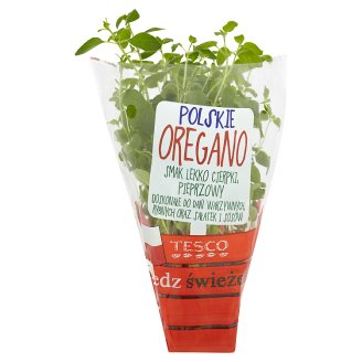 Tesco Polish Oregano in Pot