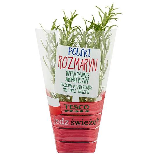 Tesco Polish Rosemary in Pot