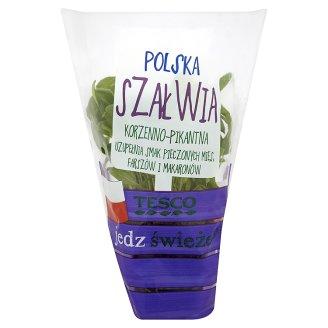 Tesco Polska szałwia w doniczce