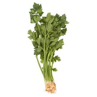 Baby Celery