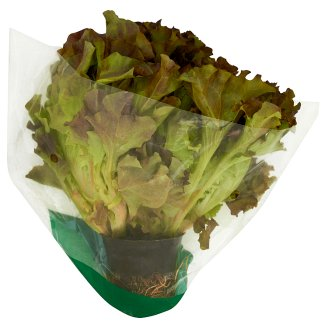 Lettuce wit Root Mix