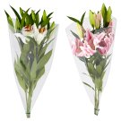 Tesco Bouquet of Lilies 3 pcs